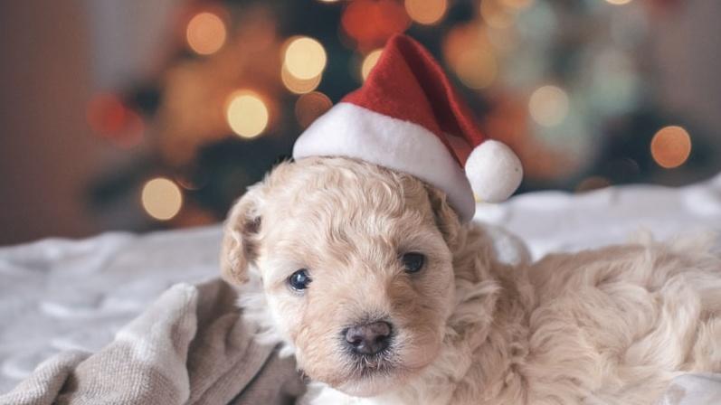 December 2020 Pet holidays