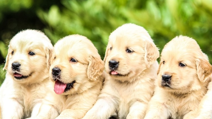 February 2020 Pet holidays