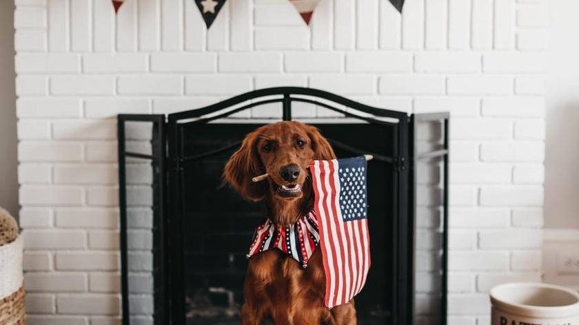 July 2020 Pet holidays