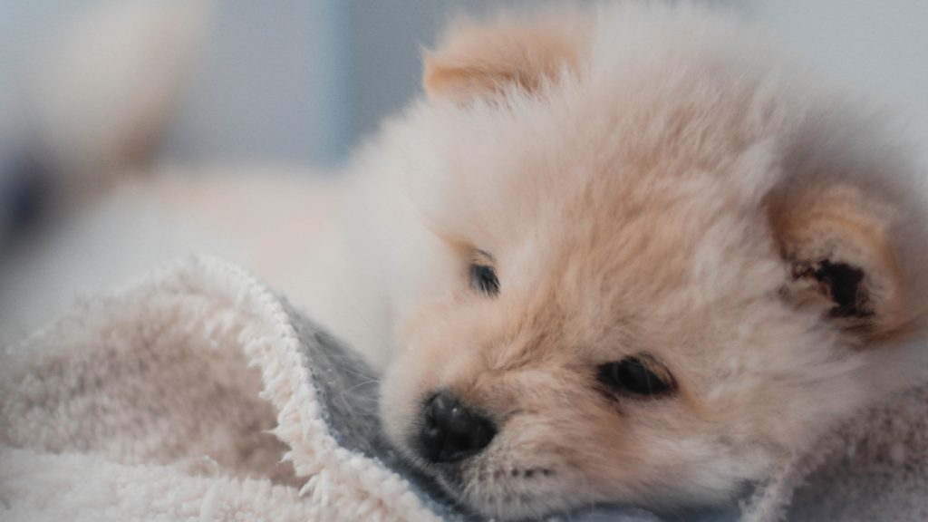 September 2020 Pet holidays