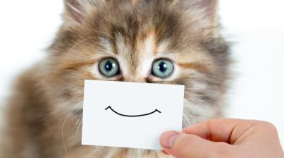 cat is smiling